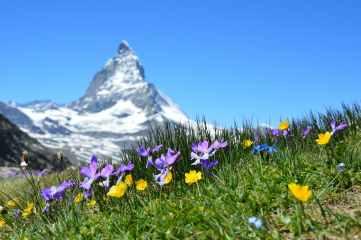 alpine beautiful bloom blossom